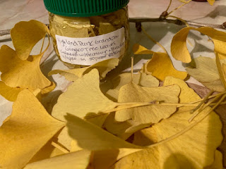 ginkgo leaves and tincture