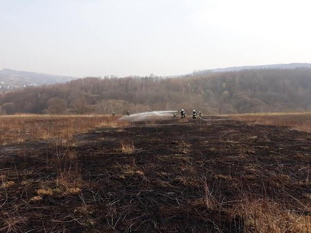 Strażacy gasili trawę w Gogołowie
