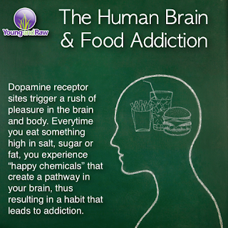 The human brain addicted to junk food