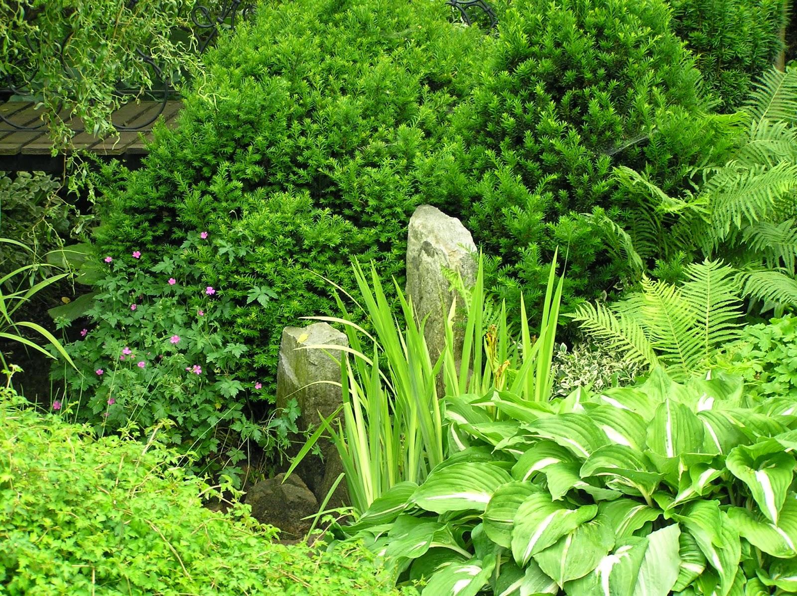 rośliny nad strumieniem