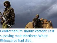 https://sciencythoughts.blogspot.com/2018/03/ceratotherium-simum-cottoni-last_20.html