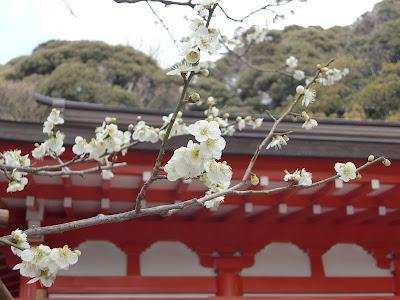 荏柄天神社:古代青軸