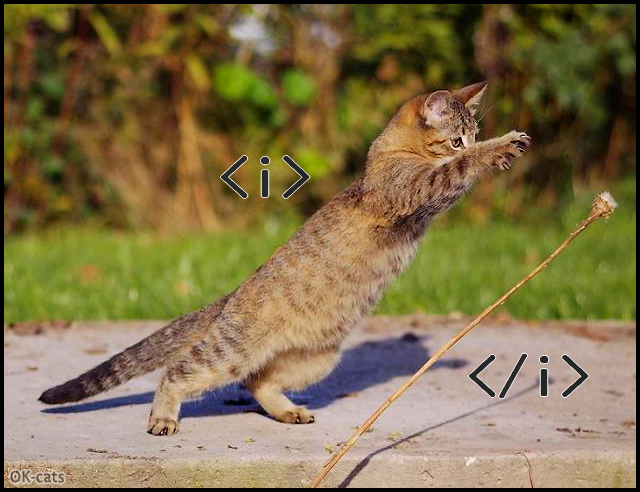 Photoshopped Cat picture • Italic cat trying to catch an italic flower Living in a italic world