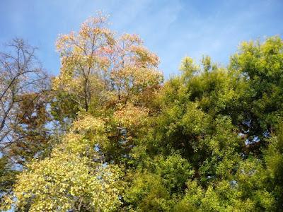 Copas de los árboles en el Jardín Botánico de Valencia