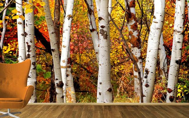 fototapet björk höst träd skogtapet björkstammar trädstammar fondtapet
