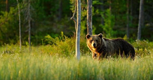 Volt, aki alig tudott elmenekülni előle: megint Miskolcon járt a medve