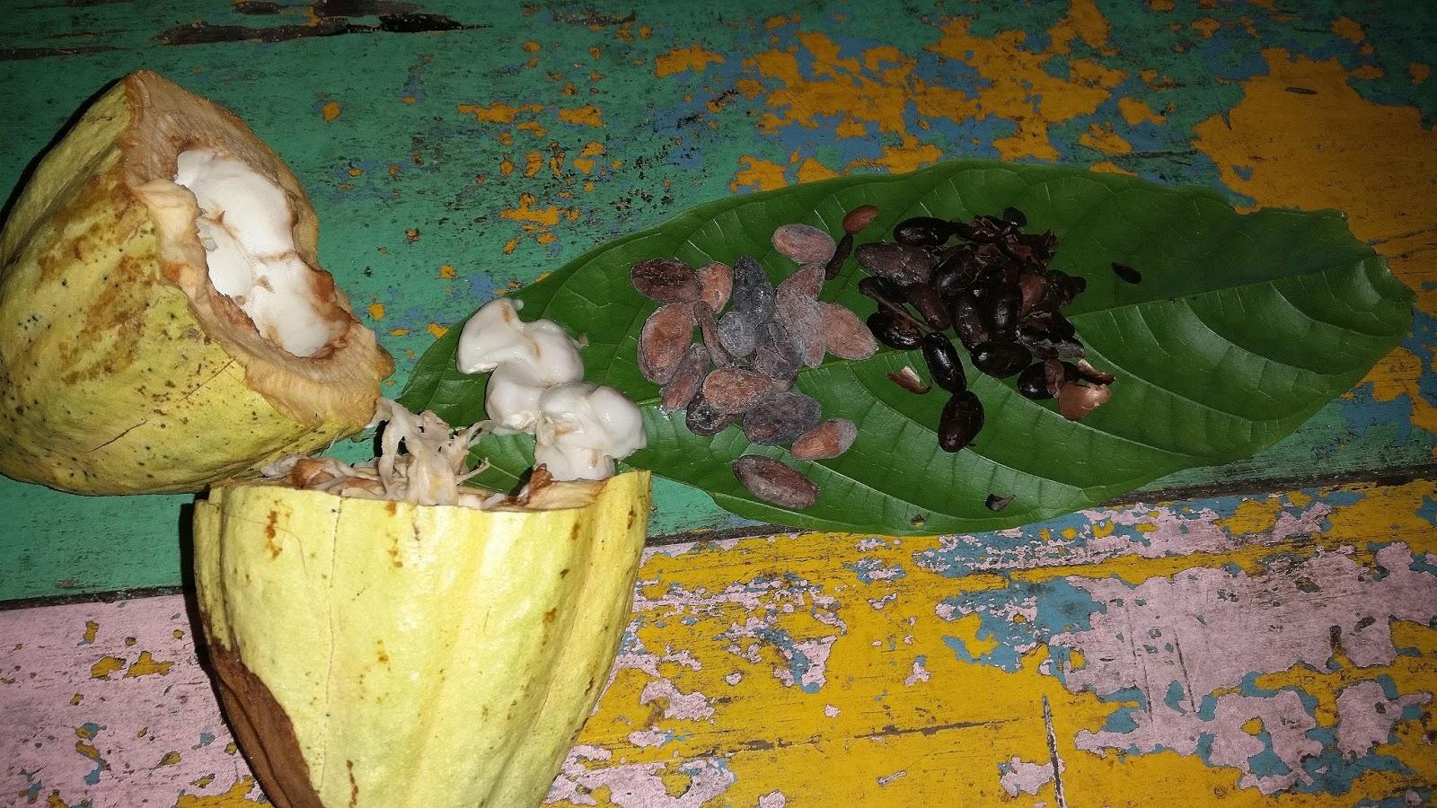 Dominikana Proces produkcji kakao ziarna