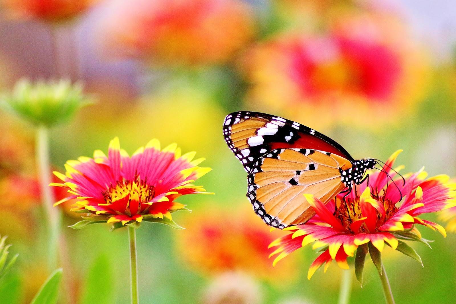 bloom-blooming-blossom-blur-butterfly-pictures