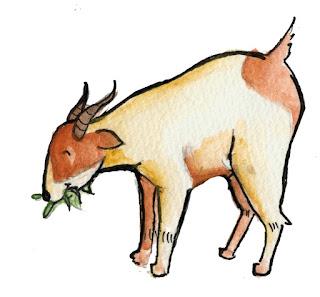 Resiko kambing makan benda lain seperti plastik dan kertas