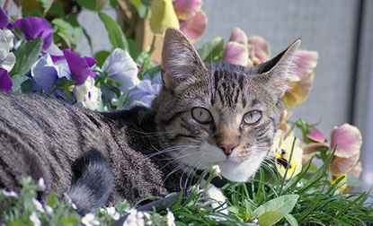 Cat lying in flowers