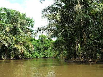 Selva Parque Tortuguero, Tortuguero,Costa Rica, vuelta al mundo, round the world, La vuelta al mundo de Asun y Ricardo, mundoporlibre.com