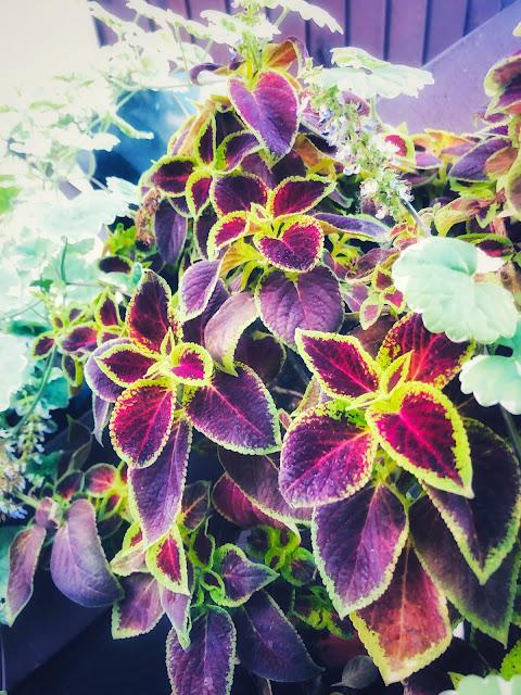 kwiaty ozdobne z liści