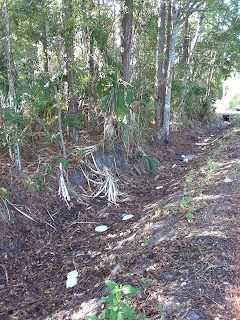 ditch with litter