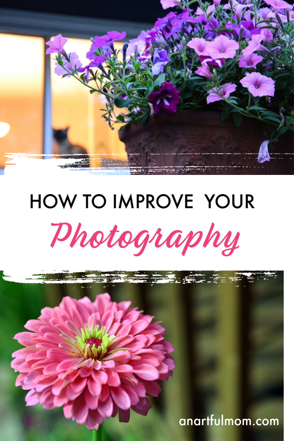 Photography tips for better photos