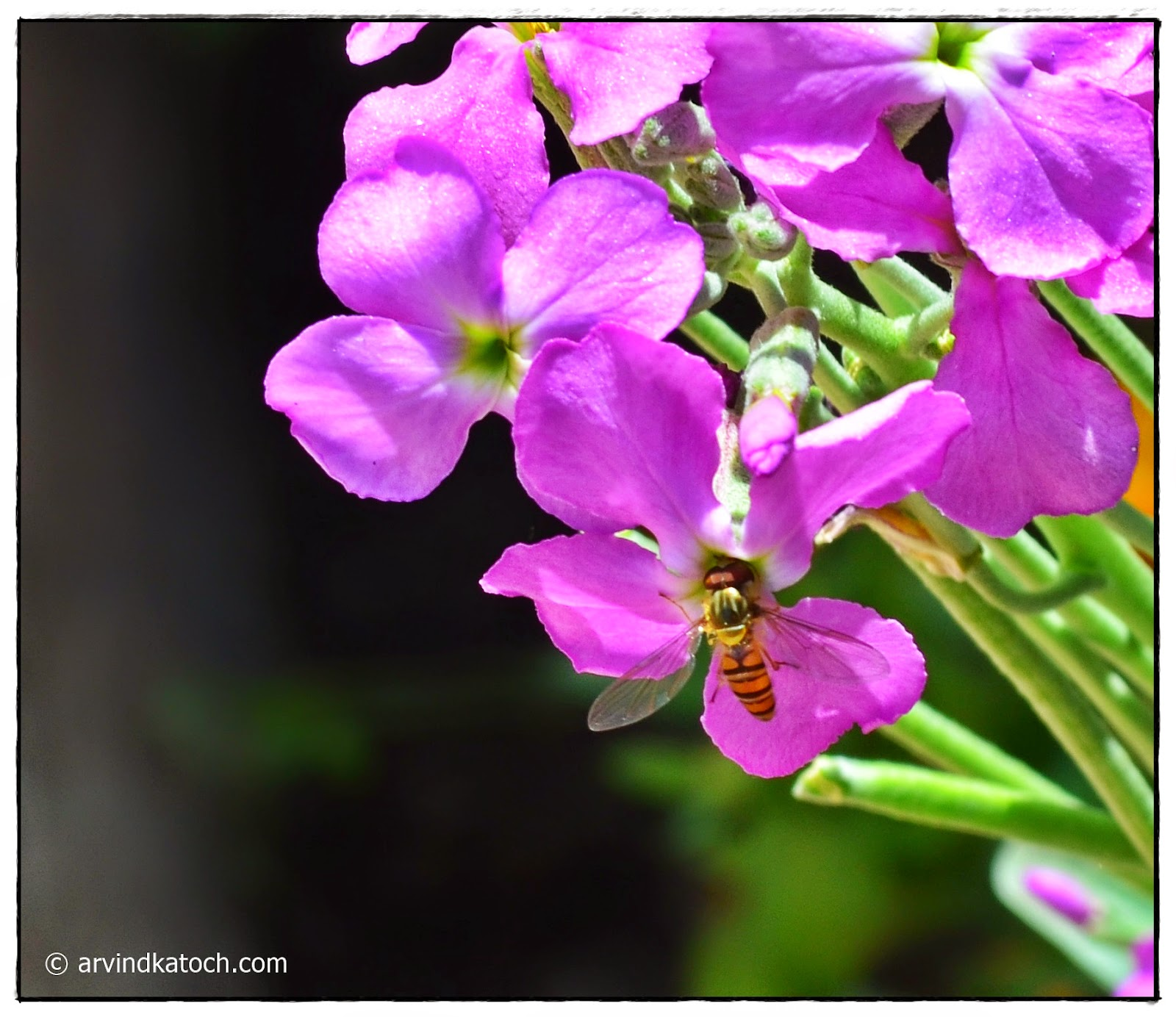 Bee, Nectar, Garden Flower, Flower
