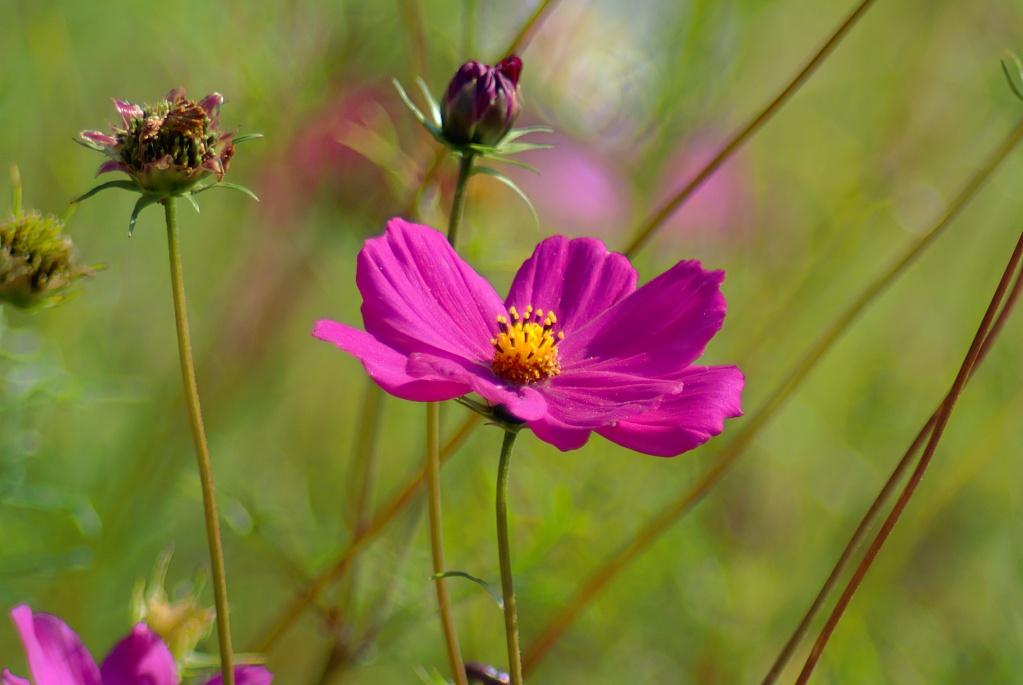 #120 Orestor f4 200mm – Sommerblume