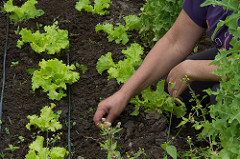 Jovens agricultores de Sergipe produzem agroecológicos com apoio da Codevasf