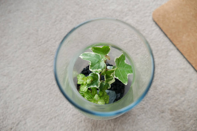 How To Build Your Own Terrarium At Home, DIY Terrariums Shop Review, DIY Terrariums Shop etsy, terrarium kits cheap uk, terrarium kit uk, closed terrarium kit, etsy terrarium kit