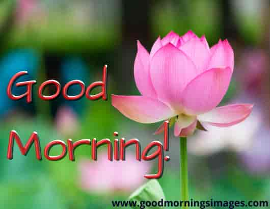 Good Morning shayari Free Download