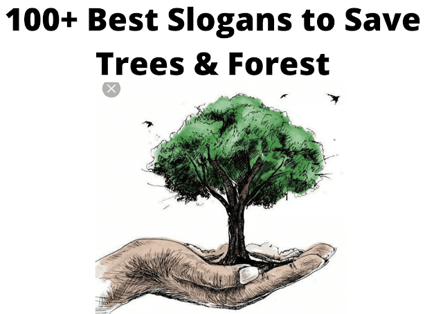 100+ Best Slogans to Save Trees & Forest