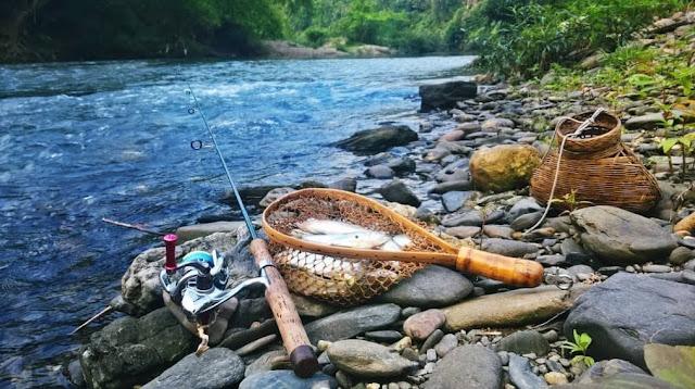 Câu cá ở suối: Tìm vị trí và cách nhận biết nơi nhiều cá để câu
