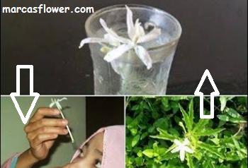 Kitolod Flower