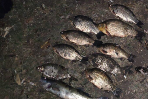 Elfogták az orvhalászokat