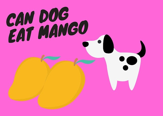 can dog eat mango ?
