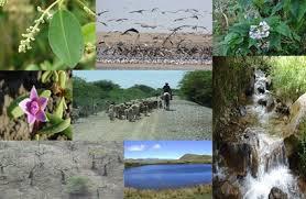 cuenca hidrografica SEMANA 6  MANEJO DE CUENCAS HIDROGRAFICAS