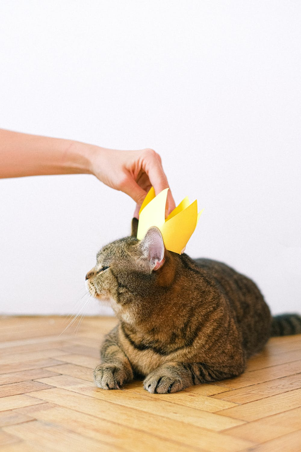 Cat Behavior Guide: Find Out What Your Cat Is Trying to Tell You