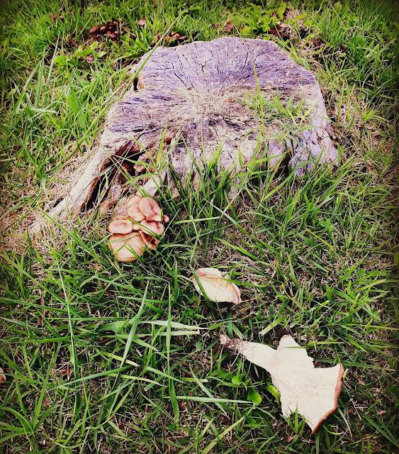 Outono - cogumelos - A Bella e o Mundo