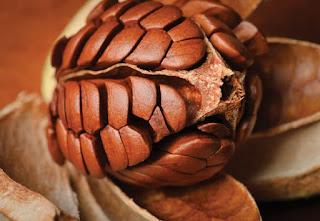 Mahoni lebih dikenal akan kualitas batangnya yang bagus dan besar lengan berkuasa Manfaat Buah Mahoni dan Bijinya Bagi Kesehatan