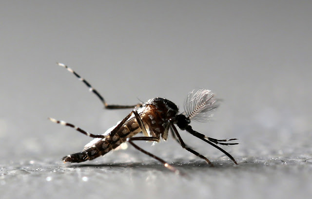 Climate change has caused the spread of some mosquito-borne diseases
