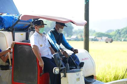 Bupati MYL Panen Padi Seluas 180 Ha di Panaikang