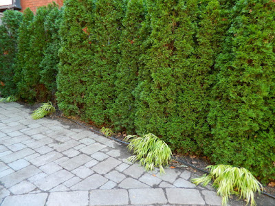 Forest Hill Toronto front yard fall clean up after by Paul Jung Gardening Services