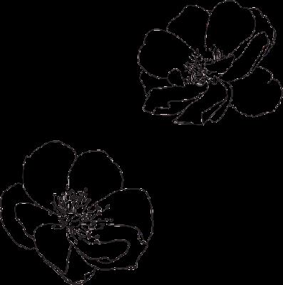 Sketsa Gambar Bunga