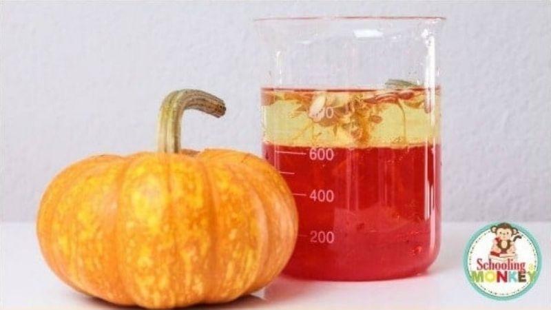 parts of a pumpkin density experiment
