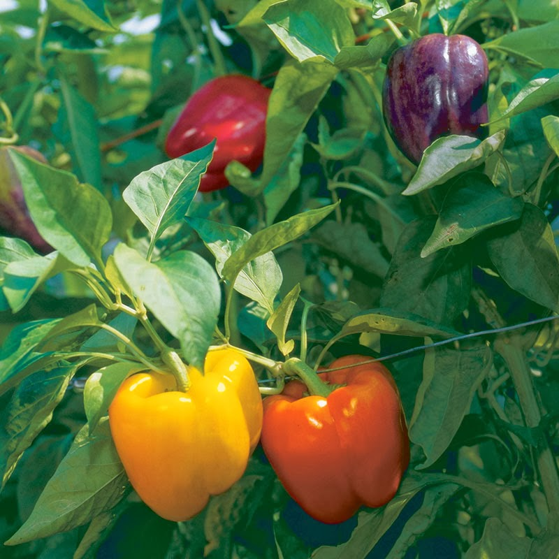 Which vegetable seeds can be sown in January