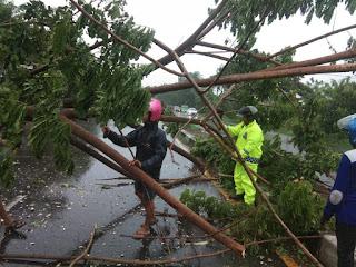 Dengan Sigap , Personil Polsek Mandalle Bersama Warga Evakuasi Pohon Tumbang