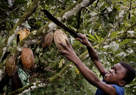 farmer killed cocoa thief