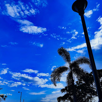Blue nature | palm tree