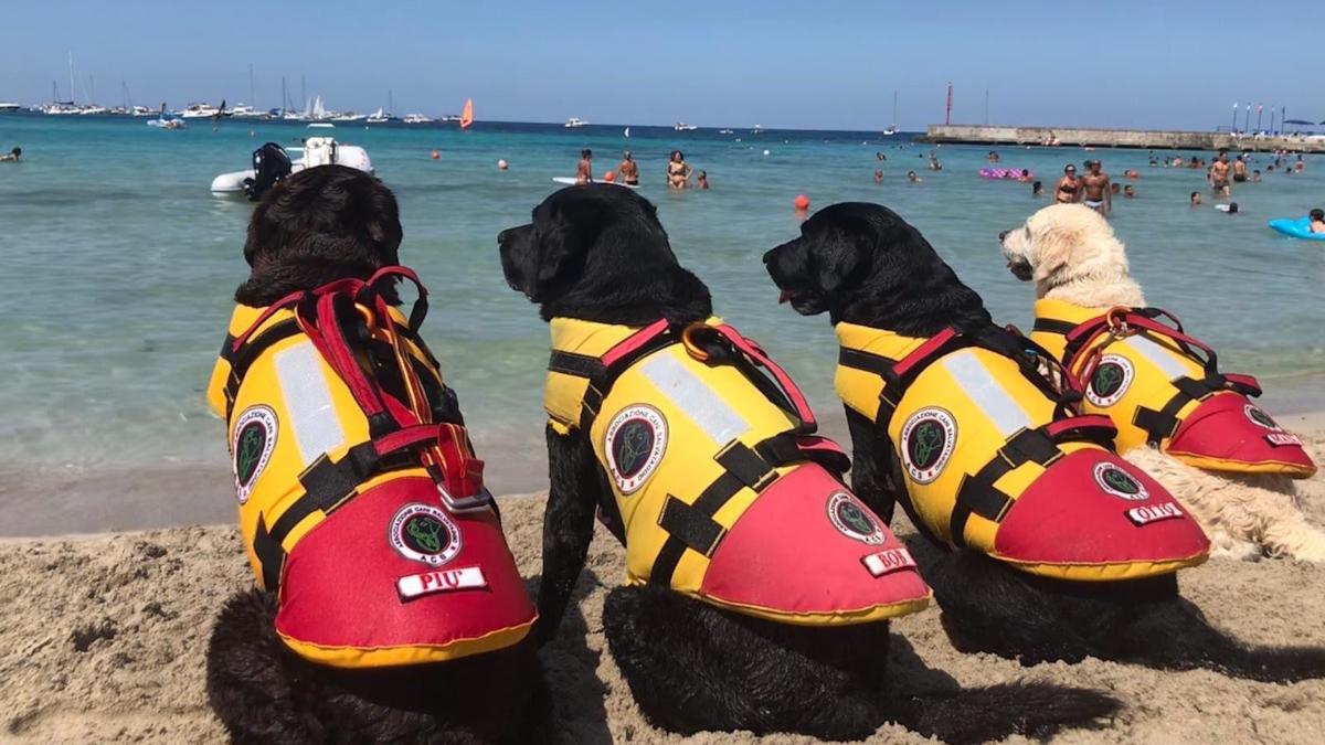 Cani da salvataggio spiaggia libera Catania plaia di Catania