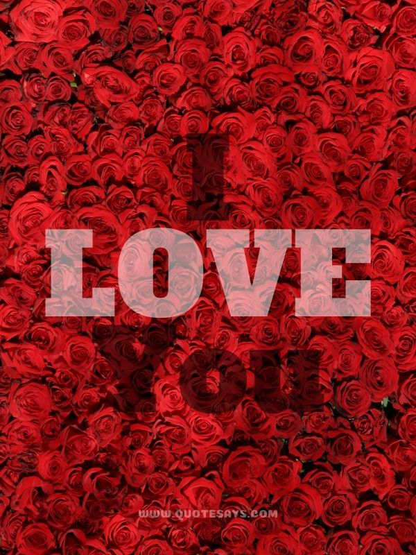 I Love You Images with Red Roses