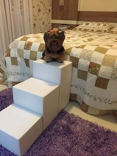 cães pequenos escadas