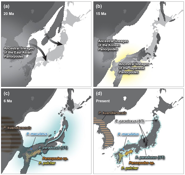 The parallel ecomorph evolution of scorpionflies: The evidence is in the DNA