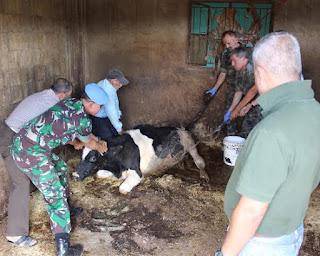 Satgas Indobatt Gelar Pengobatan Hewan Milik Masyarakat Lebanon Selatan