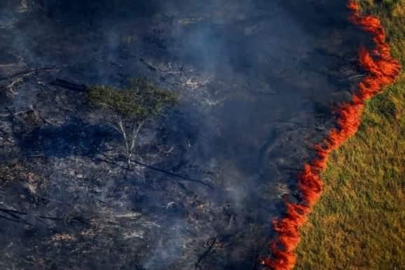 Pará lidera ranking de desmatamento da Amazônia Legal no mês de março, aponta Imazon