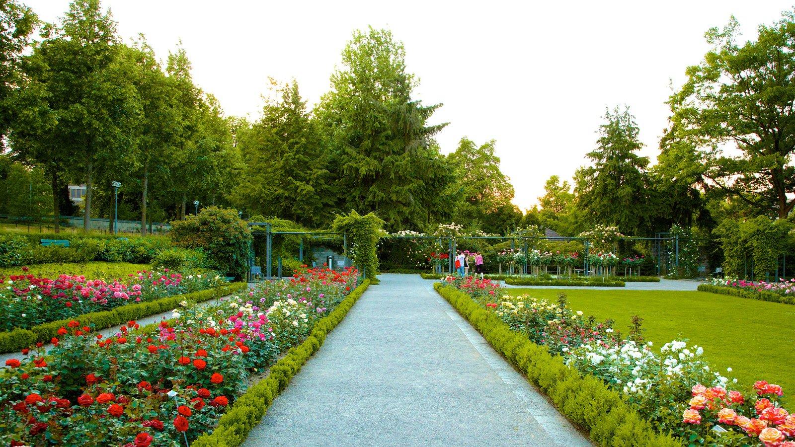 the rose garden - Berna