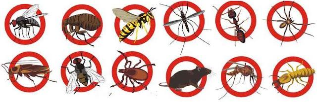 Proven Pest Control Bankstown