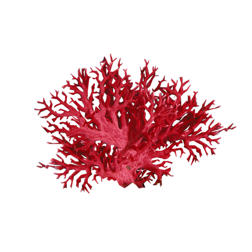 red sea coral illustration, Coral reef Alcyonacea Sea, coral, coral, aquarium Decor png by: pngkh.com